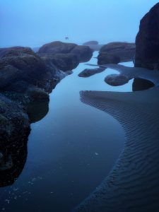 Olympic Tidepools (2015), digital archival print, 16 by 24 inches