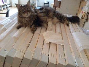 Julian Hatton's Maine Coon Cat, Brutus, rests after a long day of stretching (not canvases).