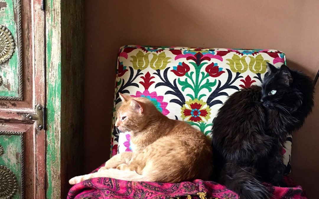 The Second Annual Studio Pets Contest