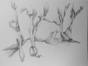Karen Jelenfy, untitled daily drawing (2018), pencil on paper, 9 by 12 inches