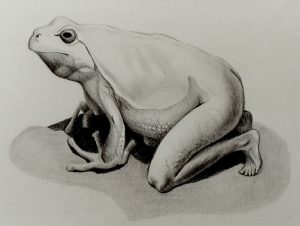 Frog in Transition (1999), pencil on paper, 11 by 8.5 inches