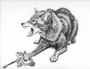 Trapped Coyote, Snarling (2013), 12.5 by 10 inches