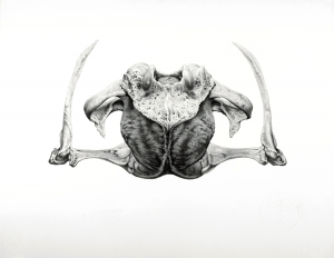 Bidden I (2009), graphite on paper, 23 by 29 inches