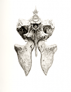 Bidden IV (2010), graphite on paper, 29 by 23 inches