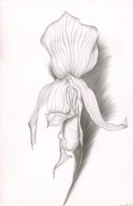 Orchid Study (1977), copperpoint on clay-coated paper, 18 by 12 inches