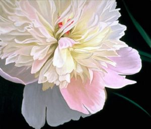 Hildene Peony (2004), oil on linen, 48 by 54 inches